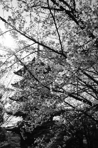 03-04-2019 Kyoto (98)