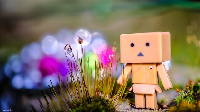 Danbo And The droplets - 6469