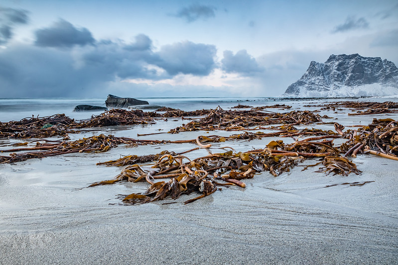 20190304-Land of Light Photography Workshop, Lofoten-020.jpg