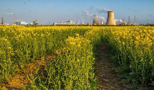 Yellow rapeseed field Saltend lead in lines | by Ray Duffill