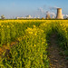 Yellow rapeseed field Saltend lead in lines