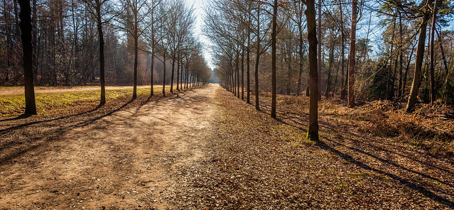 Seemingly endless path in a Dutch forest