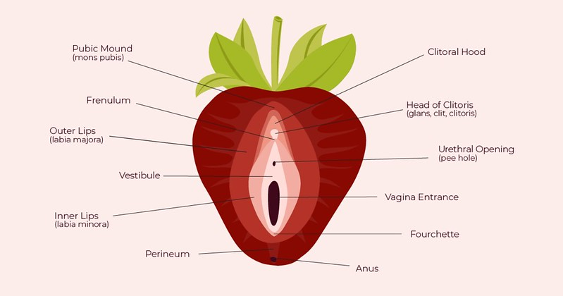 Strawberry Vulva diagram from The Cunnilinguist
