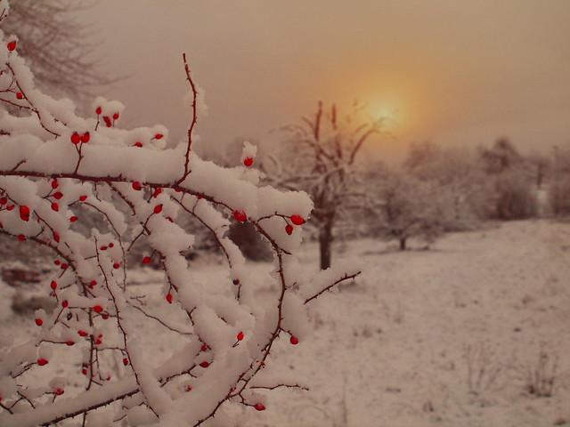 etwas farbe zu dem SchneeweisP2042036