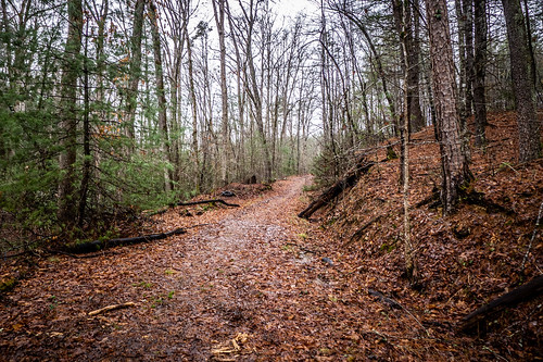 Tall Pines Preserve and South Saluda Church Cemetery-20 | by RandomConnections