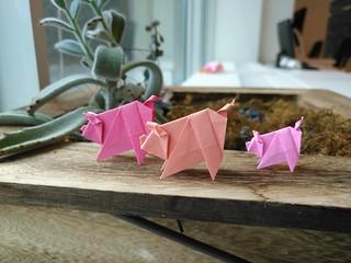 Scolli Pigs (miniature)