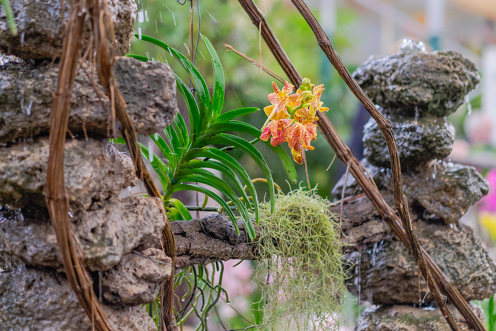Orchids at the waterfall