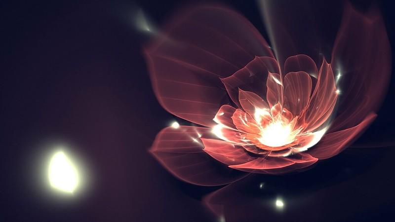 Обои цветок, фон, темный, линии, блеск картинки на рабочий стол, фото скачать бесплатно