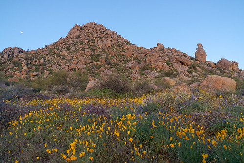 The Desert in Bloom (Just Before First Light) | by rickcameron