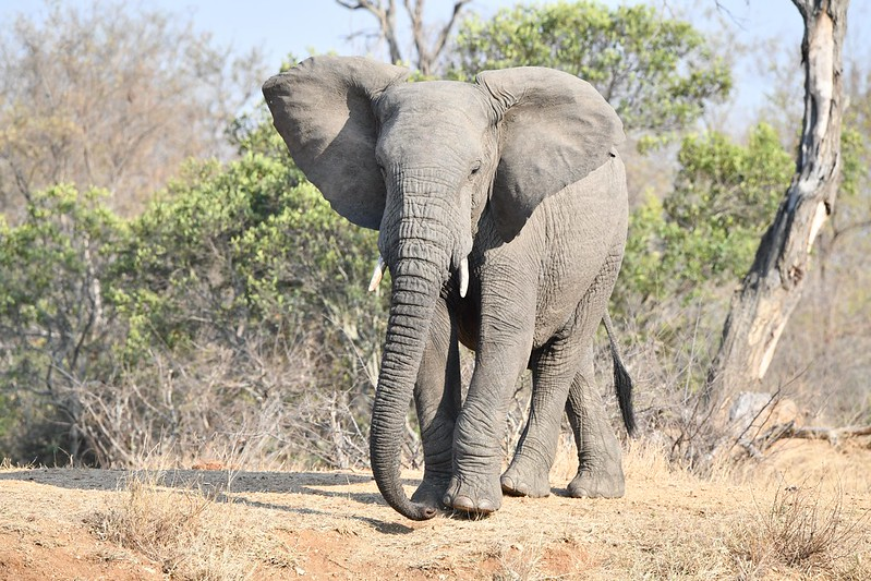 2292 Elephant
