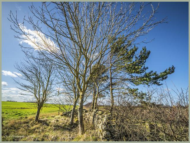Landscape & Old stone wall DSC_2753