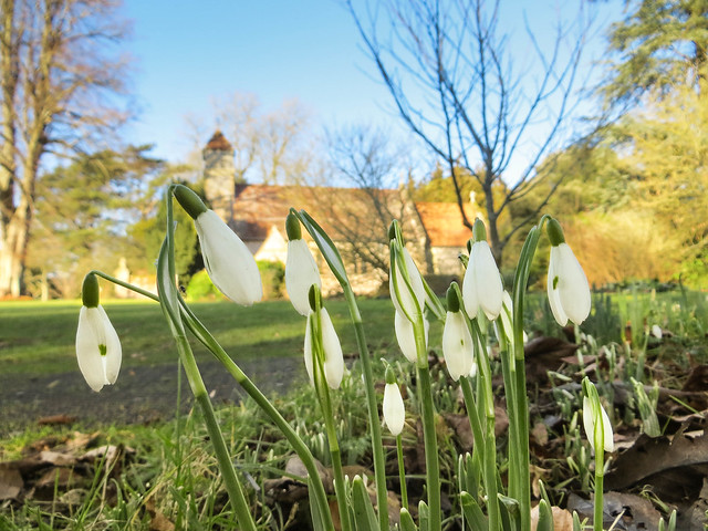 Snowdrops at Hinton Ampner
