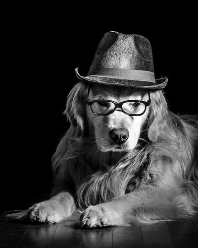 Dog Noir   by bztraining