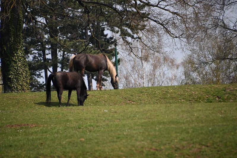 Horses 13.04 (2)