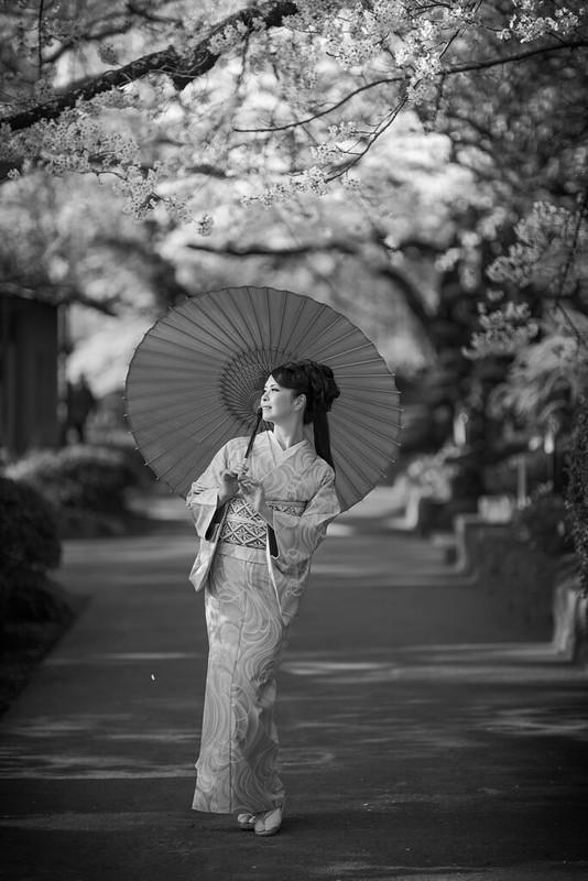 Sakura season JAPAN ( Cocoro )