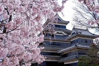 松本城と桜 | by ith_plus
