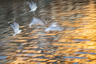 Intentional blur practice | by Birgit F
