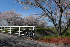 Trek 520 bicycle and peach blossoms at Yamazura, Ryuo, along  Zenkojigawa (善光寺川)