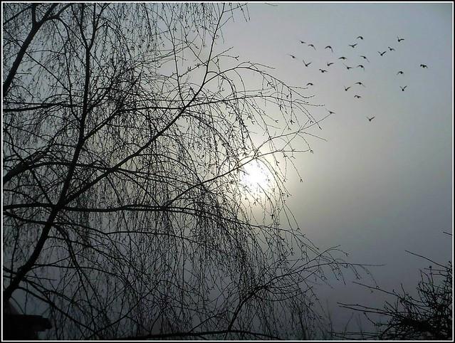 Early Birds ..