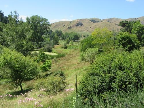 outdoor garden arboretum eastwoodhill tree hill flower pond ngatapa gisborne newzealand