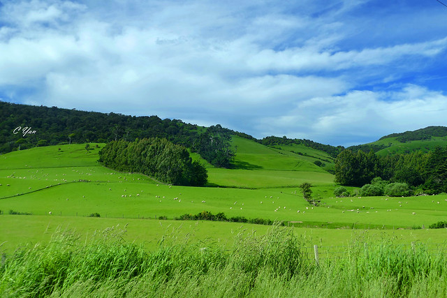New Zealand - Owaka