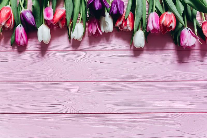 Обои Цветы, Тюльпаны, Доски, Фон, Бутоны картинки на рабочий стол, раздел цветы - скачать