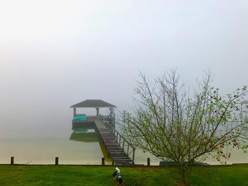 tree dock fog