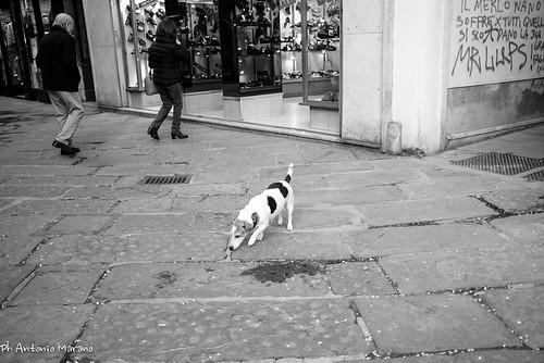 Untitled | by Antonio Marano