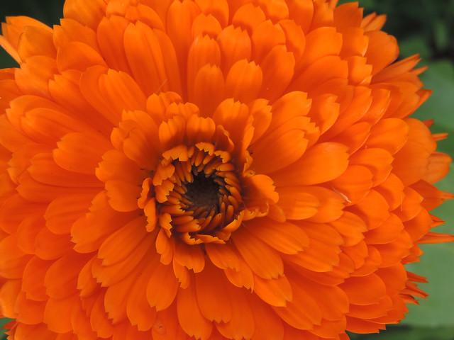 All Orange