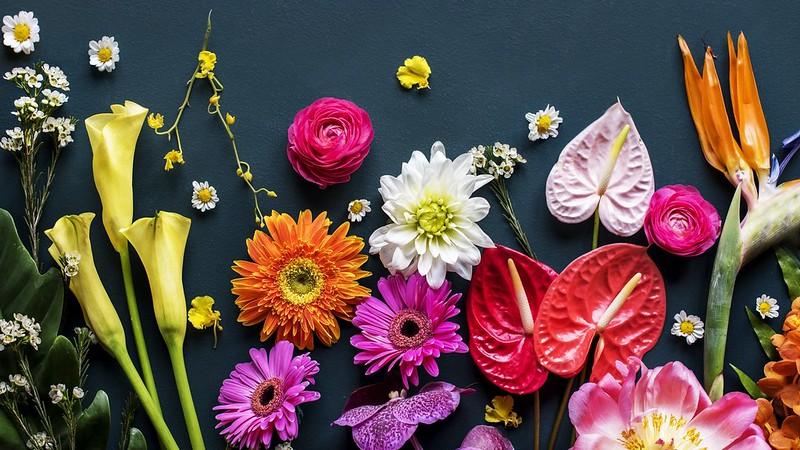 Обои цветы, чёрный фон, разные картинки на рабочий стол, раздел цветы - скачать