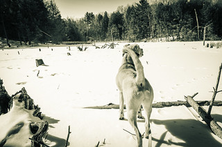 Jack on a frozen lake | by Dad from Hell