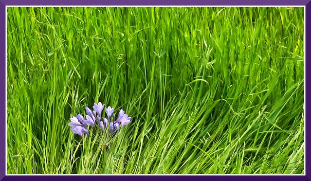 Spring_0789