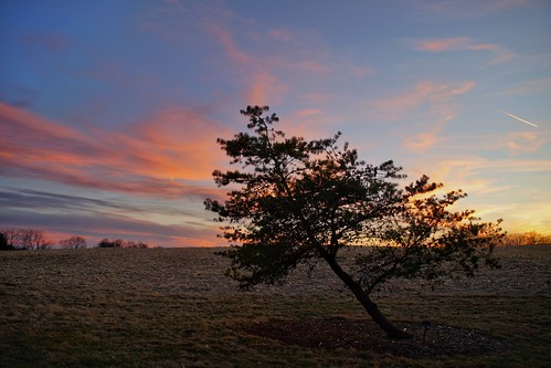 sunset tree 365the2019edition 3652019 day39365 08feb19 statearboretumofvirginia sky