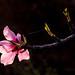 Floralmendros