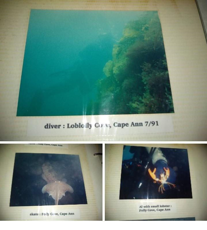 1991 dive shots
