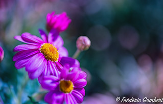 Light of Spring | by frederic.gombert