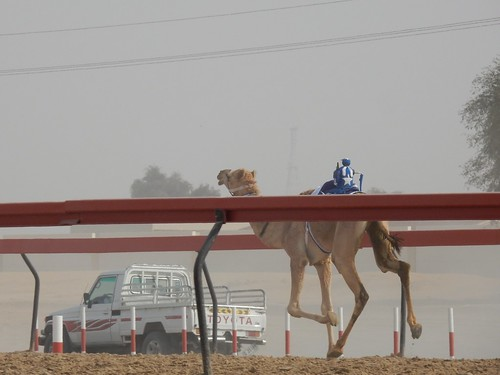 Al Marmoom Camel Racing Track - 15