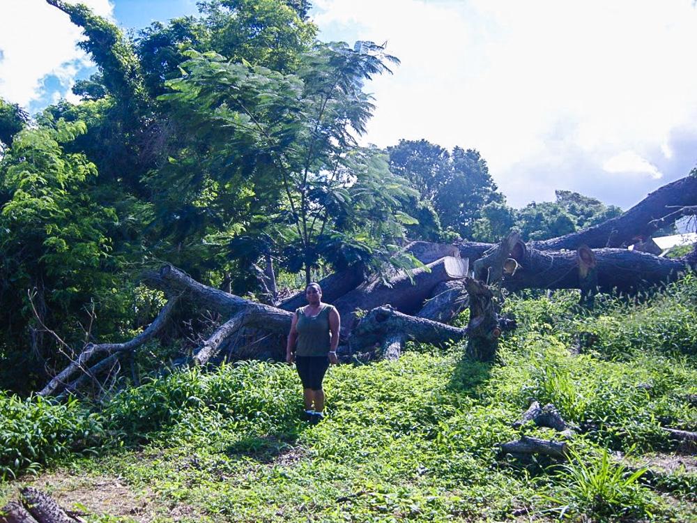 Dominica LR 6
