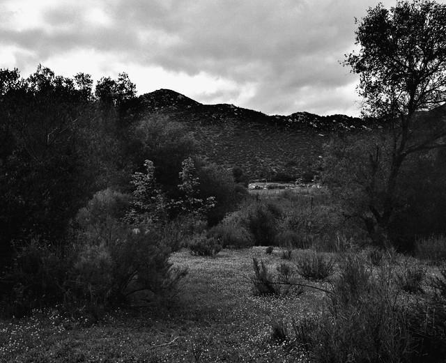 Camposanto (Mamiya RB 67 s Pro IMG_20190404_0004)