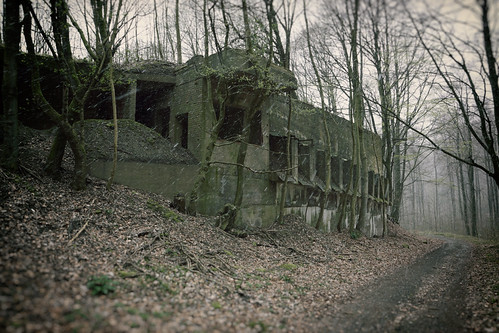 Lost in the german woods | by SurfacePics