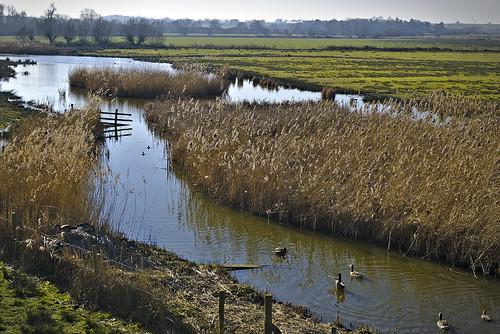 slimbridge sony a6000 zeiss reeds