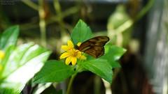 Butterfly 03