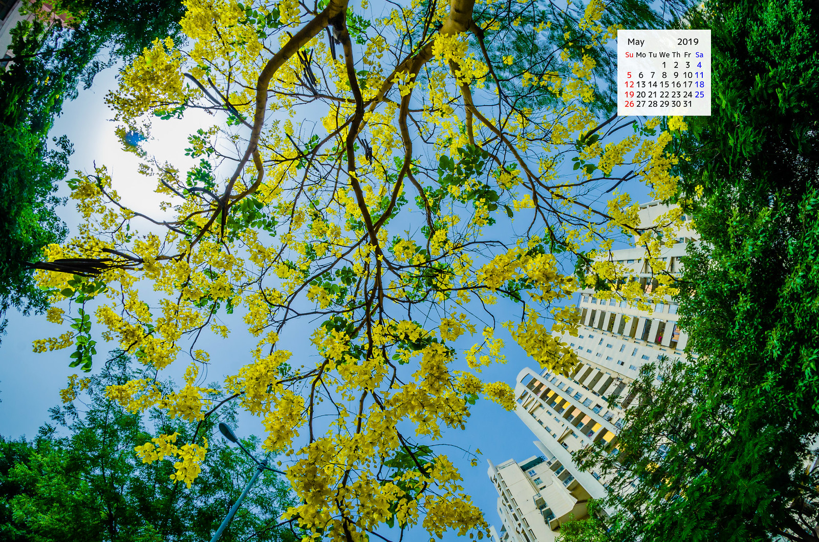 Free Downlaod May 2019 Wallpaper Calendar