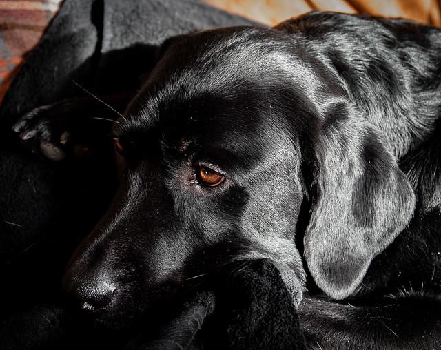 Oskar Dog