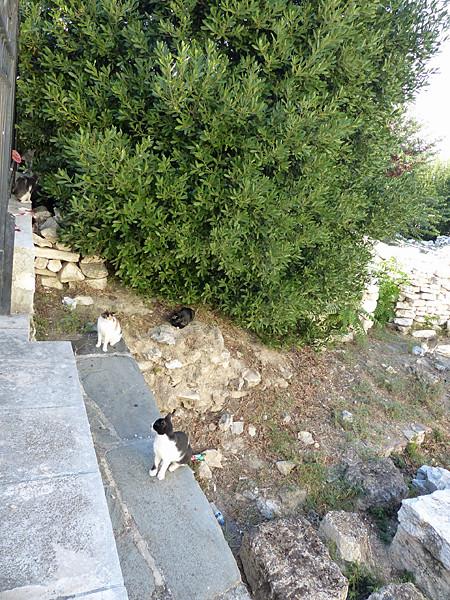les chats d'athenes