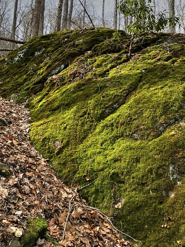 landscape haywoodcounty nc nature northcarolina vertical green moss rock woods forest roughcreekwatershed autoremovedfrom1to5faves