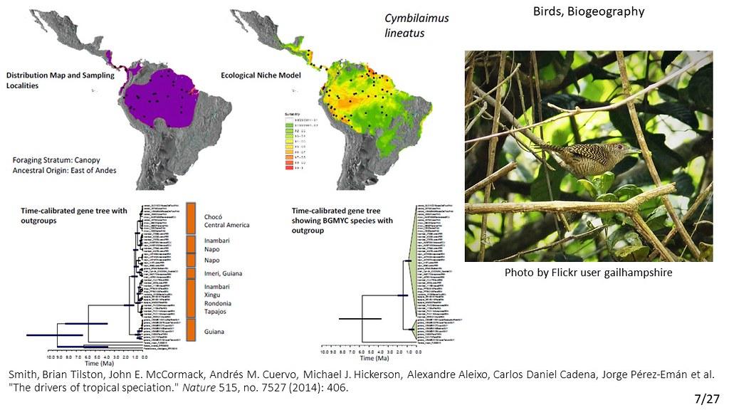 Smith et al. 2014 - Cymbilaimus lineatus