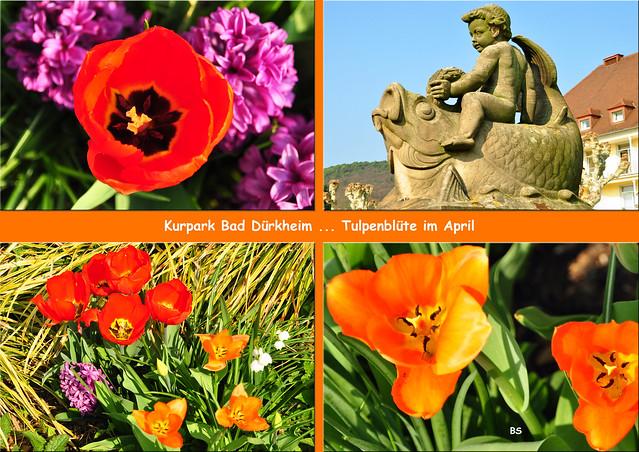 April 2019 ... Frühling in Bad Dürkheim ... Blühender Kurpark ... Fotos und Collagen: Brigitte Stolle