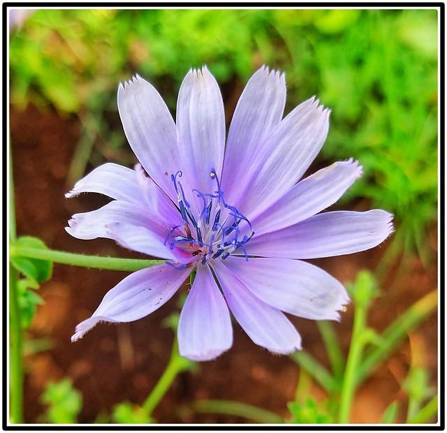 Cores da natureza. #flores #flowers #orquideas #borboleta #naturalbeauty #natureza #naturephotography #jardim #floreslindas #revistaxapury #eunotg #criacaodedeus #obradivina #instaflowers #instaflores #motox2 #instamotox2 #garden #floricultura #instagram
