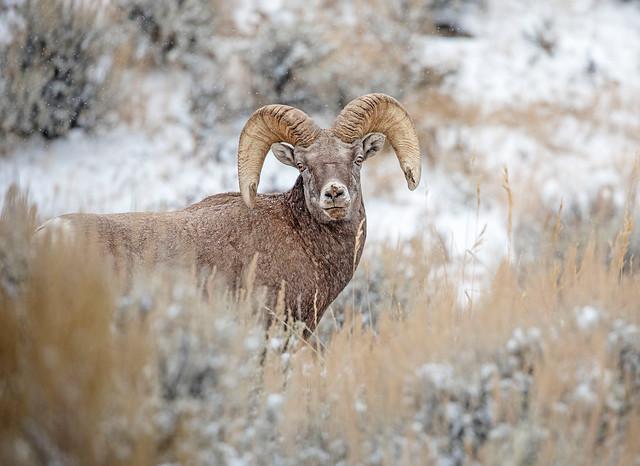 Ram-atude...